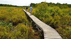Boardwalk at White Memorial Foundation
